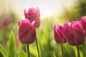 Envía Arreglos Florales para cumpleaños