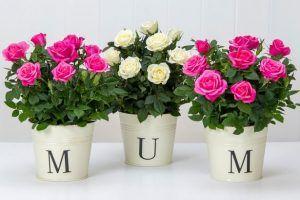 envia flores para mamá